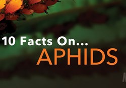 10 Facts on Aphids