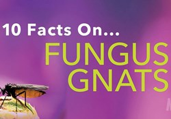 10 Facts on Fungus Gnats