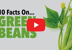 10 Facts On... Green Beans