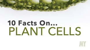 10 Facts On... Plant Cells