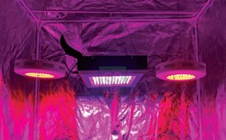Grow Green with G8LED Technology