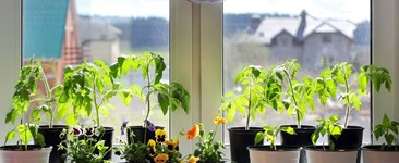 How to Start Your First Windowsill Garden