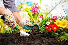 How to Prepare the Best Soil for Your Flower Beds