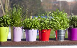 The Do's and Don'ts of Container Gardening