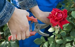 Pass the Pruners: How to Control Plant Growth