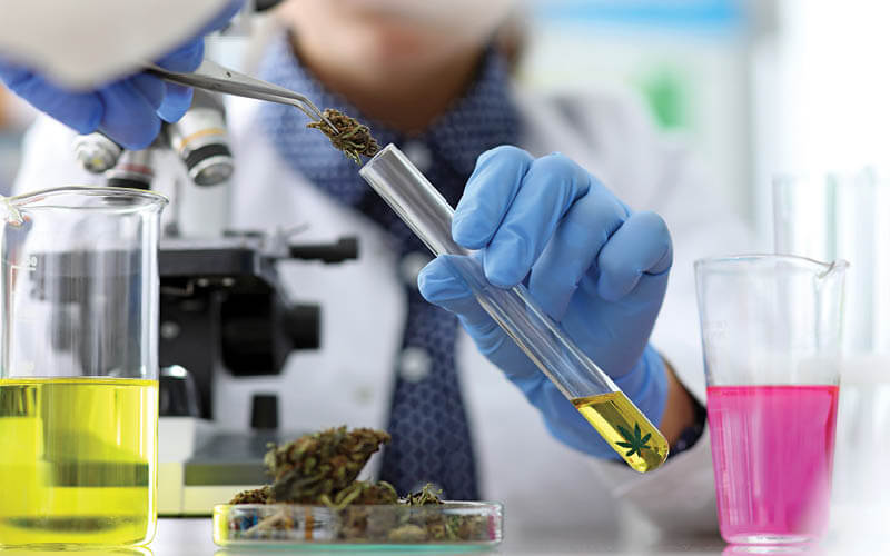Scientist inserting cannabis flower into test tube