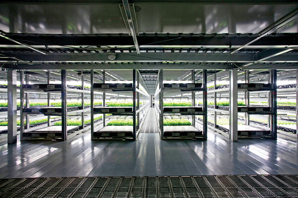 Interior view of Spread, a large vertical farm in Kyoto, Japan