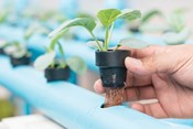 Troubleshooting Your Plants: Symptoms to Look Out For