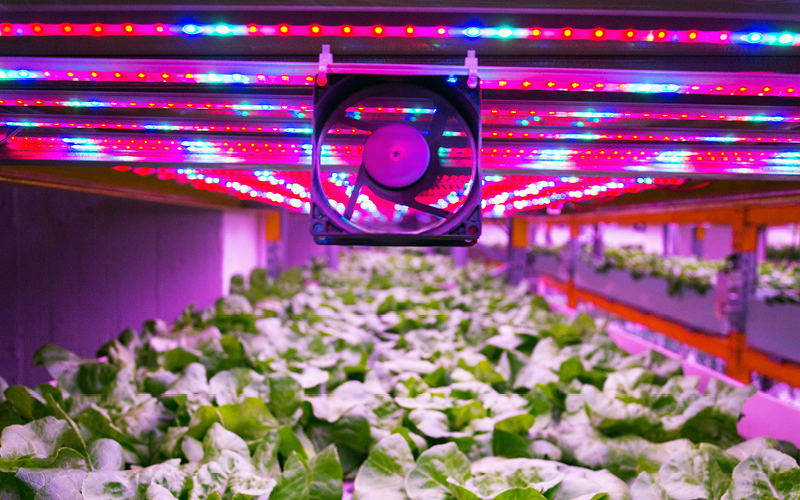A fan mounted to the ceiling of a hydroponic growroom.