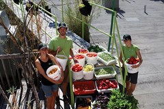 Les Urbainculteurs: A Closer Look at Urban Gardening in Quebec