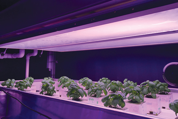 The Future of LED Grow Lighting: Photonic Films
