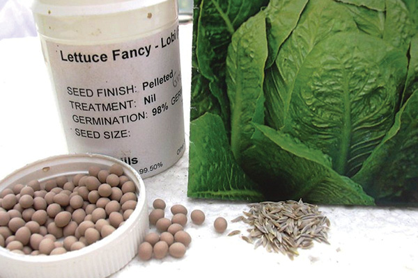 Seed Germination: How to Give Your Seeds a Strong Start