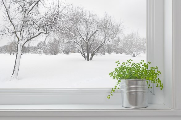 Two Flowering Rooms and Others Ways You Can Adjust Your Indoor Grow for Winter