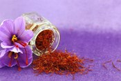 Growing Saffron Hydroponically