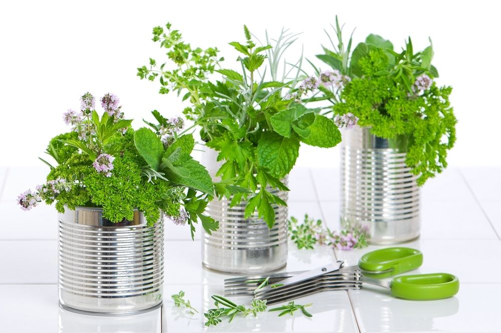 11 Medicinal Plants You Can Grow at Home