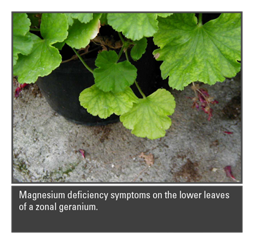 The Role of Magnesium in Plant Culture