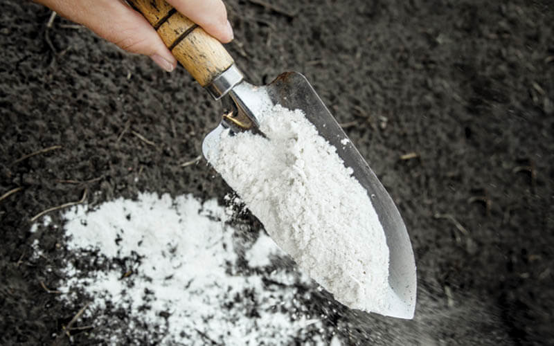 Gardener mixing dolomitic limestone powder in garden soil