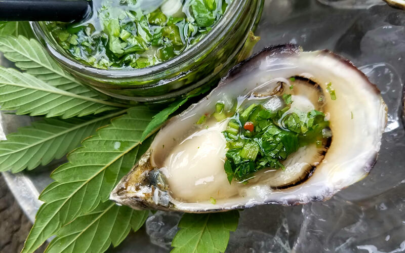 Oysters garnished with fresh cannabis leaves.