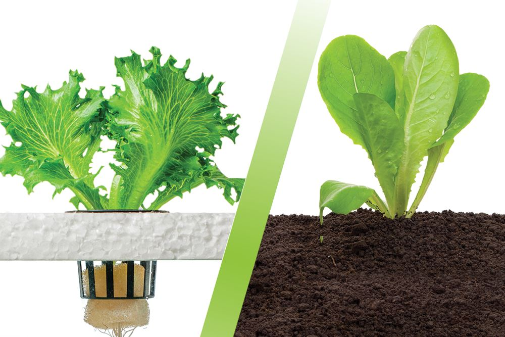 Soil vs hydroponics what method grows the best plants for Soil vs hydro