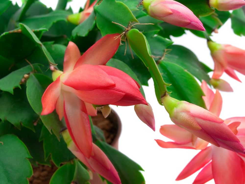 Training Your Plants: Pruning, Staking and Trellising to Maximize ...