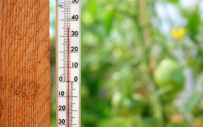 Thermometer inside a greenhouse.