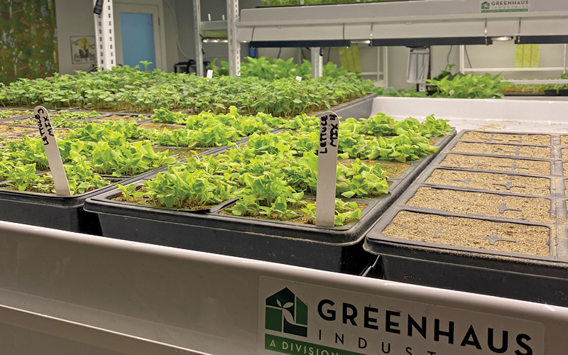 Pipp's Greenhaus grow tray systems
