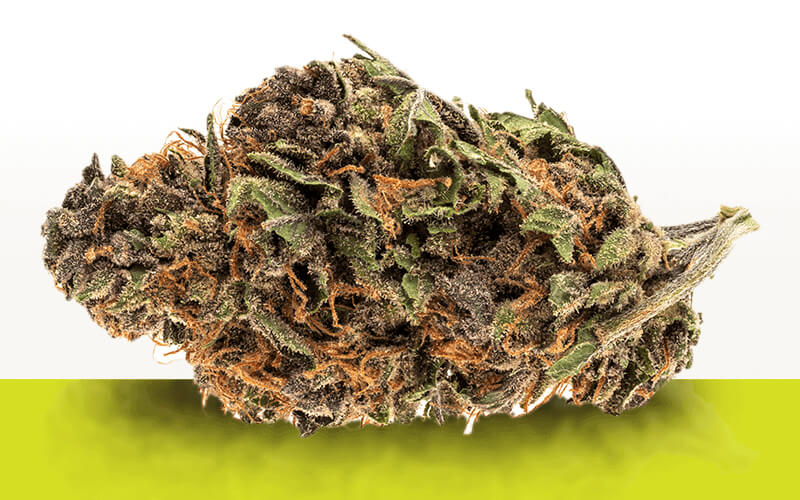 Photograph of Royal Highness strain from Good Supply Cannabis