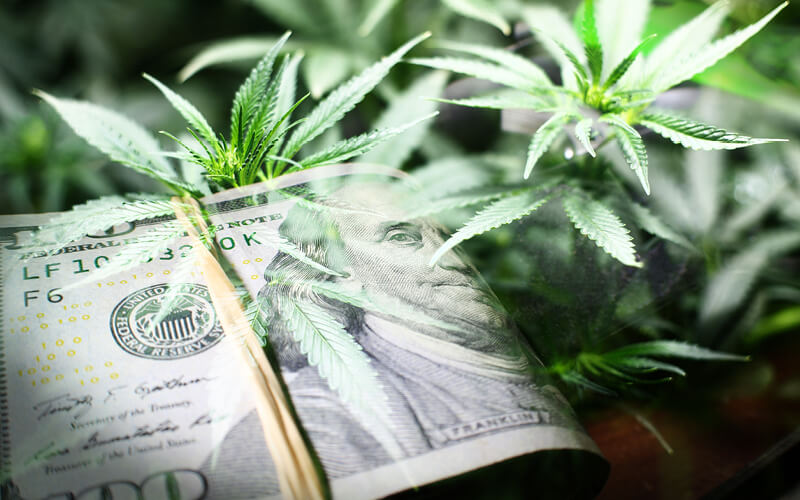 Bills of money next to a cannabis plant