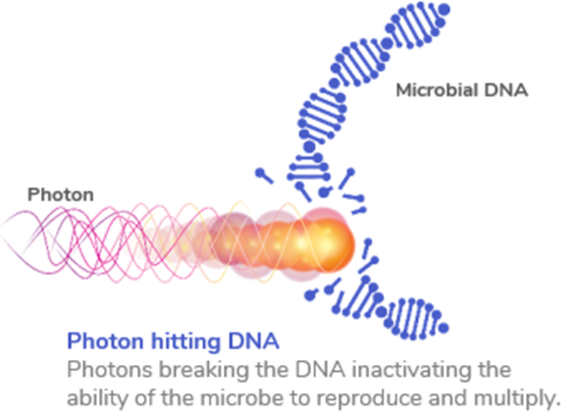 Illustration of photons affecting microbial DNA
