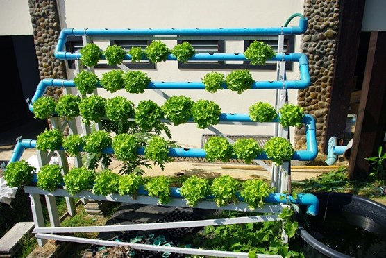 an Outdoor Hydroponic Garden