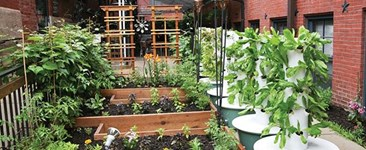 Green Arm of the Law: Common Garden Bylaws