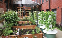 Growing 101: Skills to Garden By