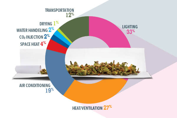Pie chart of cannabis production