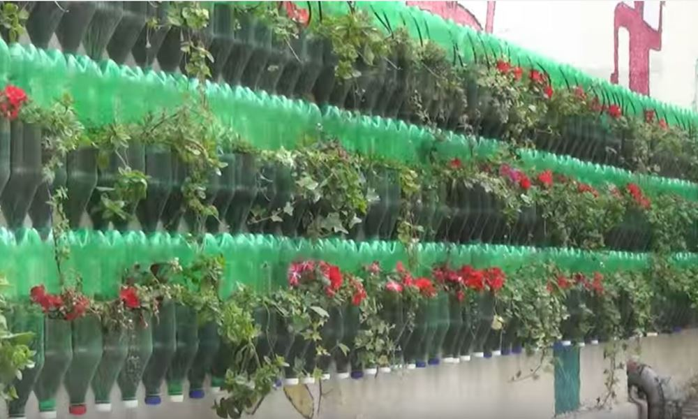 Hanging Vegetable Gardens What Vegetables Can Be Grown Can A Plant Grow  Upside Down
