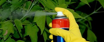 Considerations When Selecting a Systemic or Non-systemic Pesticide