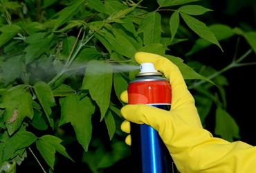 what is an insecticide definition from maximumyield