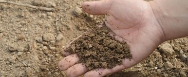 How to Test the pH Level of Your Soil
