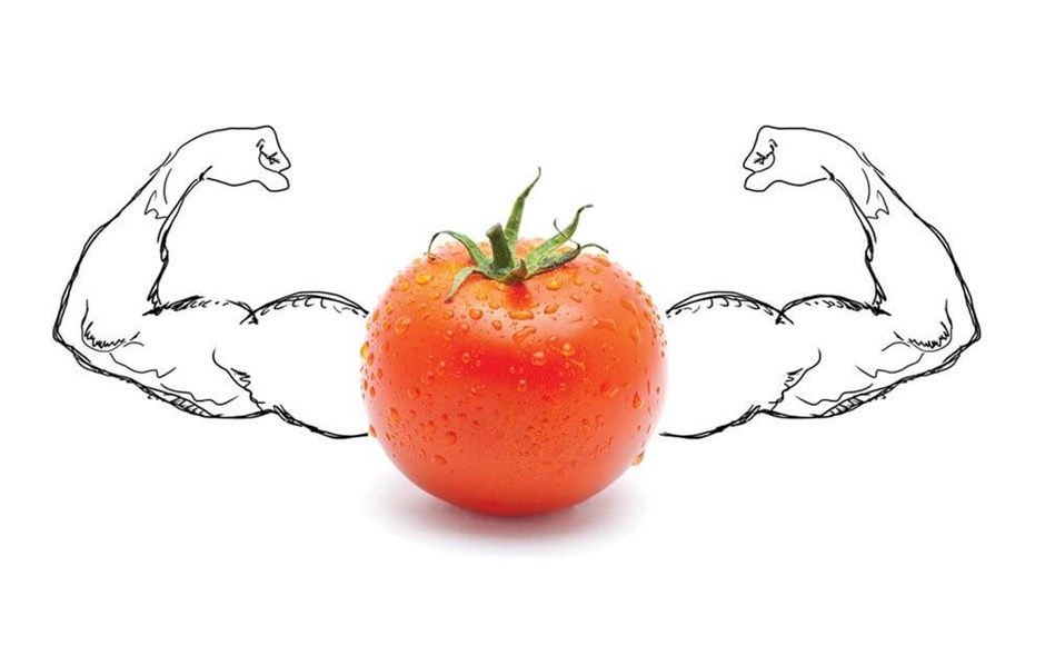 Pumping Iron: Why Plants Need Iron in Their Diet
