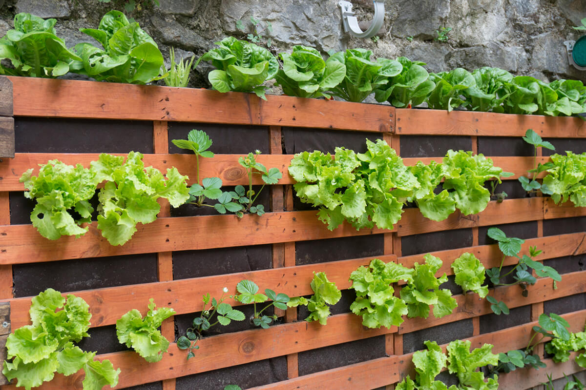 Vertical palette garden with lettuce and strawberries