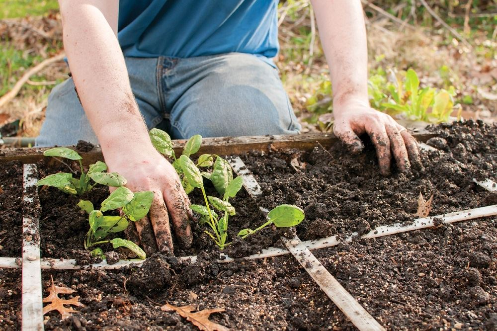 to Start a Square Foot Garden