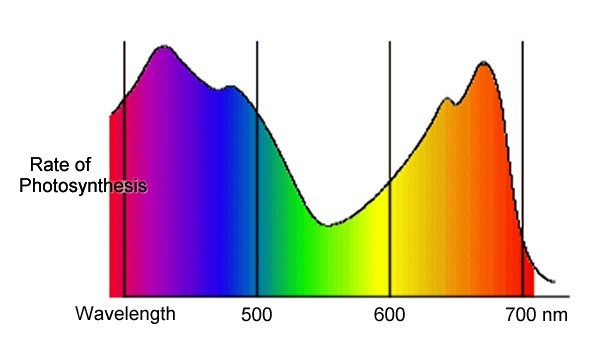 Figure 2: The effect of different wavelengths on photosynthesis