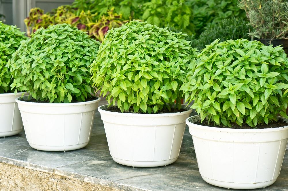 5 of the Easiest Crops to Grow in Small Spaces