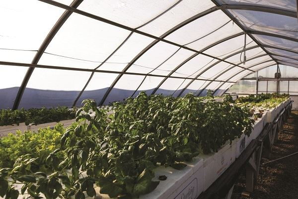 Farm to Table: Future Foods