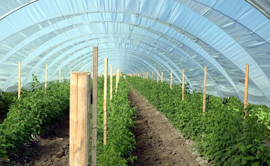 Build It Right Determining Greenhouse Design By Climate