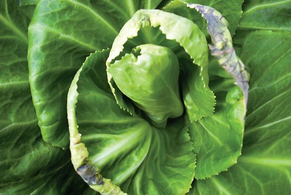How to Boost the Calcium Levels in Your Hydroponic System