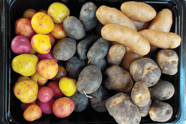 How to Grow Tubers, Bulbs, and Root Crops Using Hydroponics