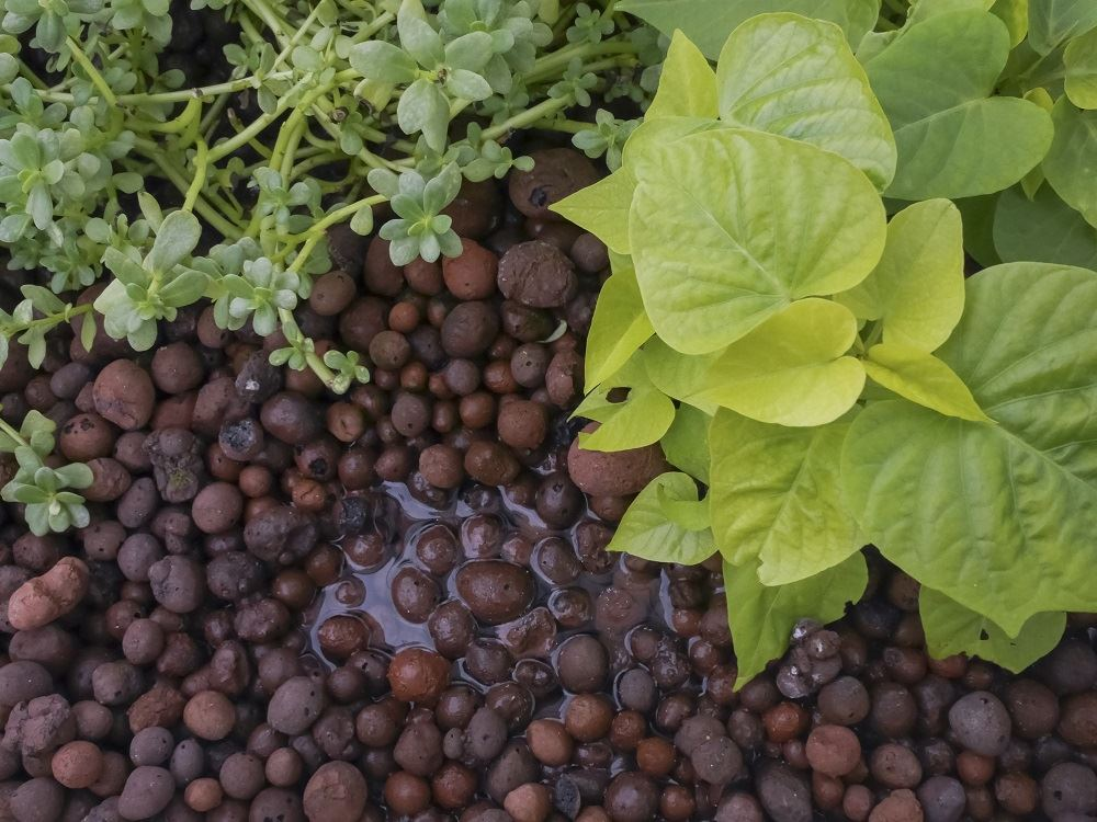 Choosing The Right Grow Media For Greenhouse Herb And Vegetable Production