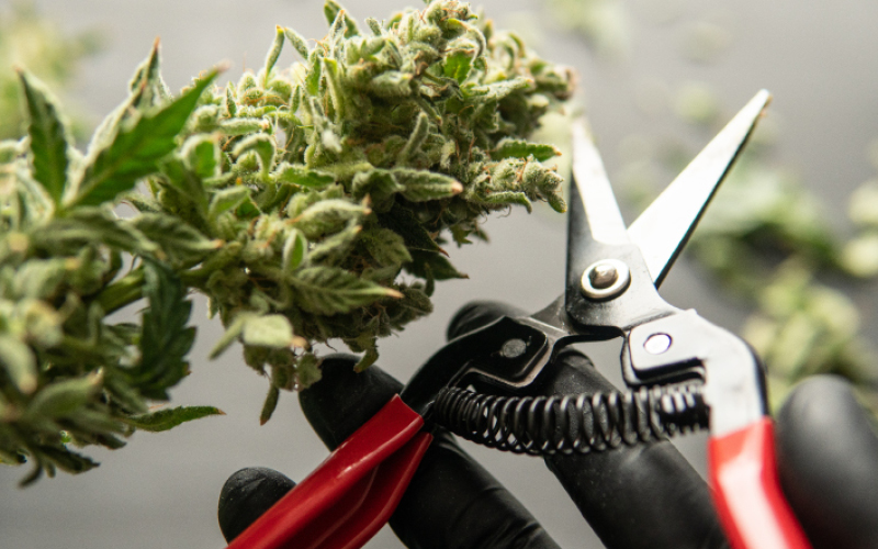 Scissor-style cannabis trimmers