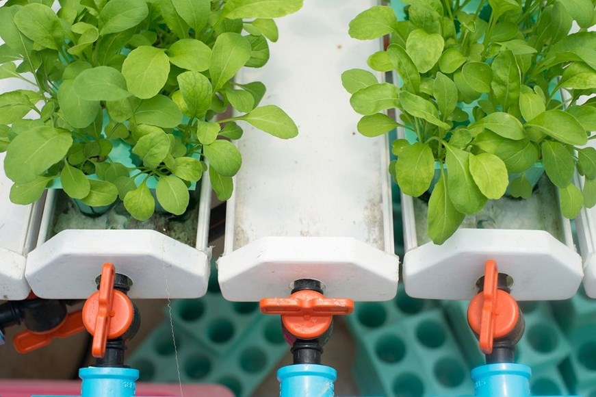 Hydroponics 101: A Back-to-basics Guide