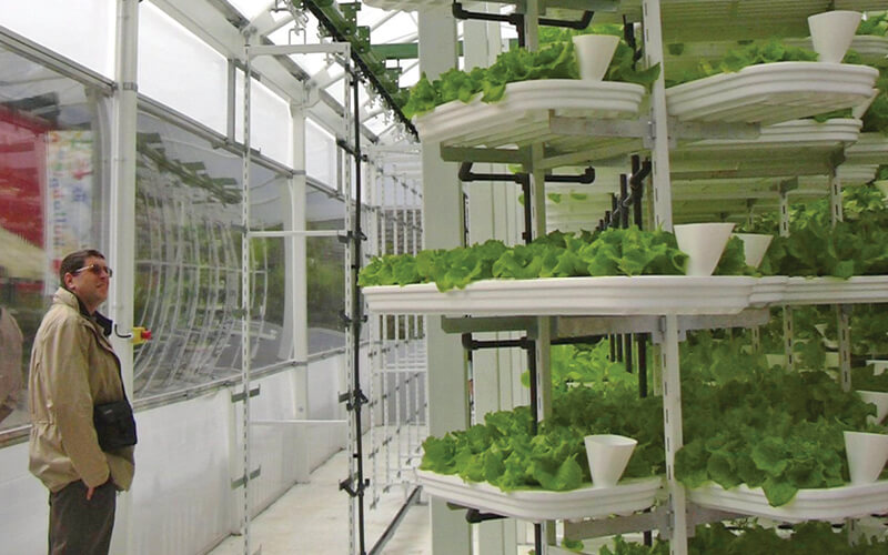 A moving lettuce production hydroponic system